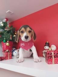 Linda fêmea Beagle 13 polegadas 10 veses sem juros pet Princess