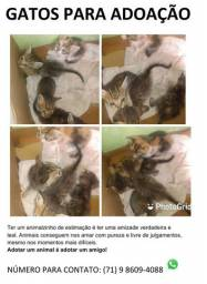 Gatos para adoção.
