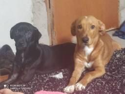 Adoção, 2 cachorros