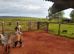 AC - Pecuária Crédito Rural