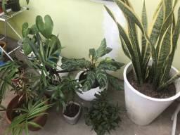 Variedade de Plantas