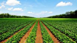 Título do anúncio: x Fazendas\Lotes\Terras\Maquinas\Sitios