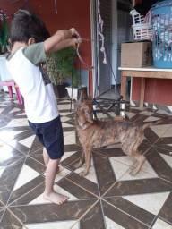 Doação cadela