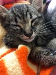 Doando gatinha filhote