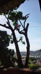 Título do anúncio: Corte e poda de árvores.