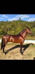 Título do anúncio: Vendo Cavalo Mangalarga Marchador