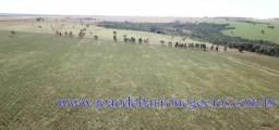 Fazenda, 38 Alqueires (183,92 Hectares), Rodovia MGC 452