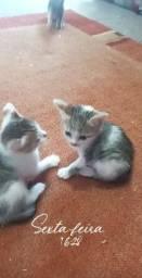 Doa-se 3 gatinhos