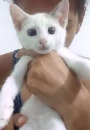 Doa-se essa linda gatinha - garanto castração