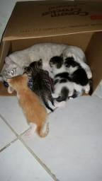 Gatinhos 2 machos e 2 fêmeas .