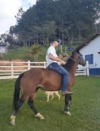 Égua QM com criolo