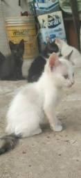 Doação de Filhotes gato