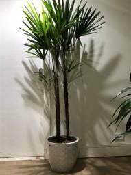 Vasos de plantas montado