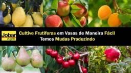 ?Promoção ?Mudas Frutíferas Para Vasos Já Produzindo - Entrego