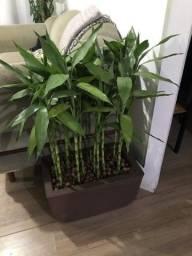 Vaso floreira de bambu da sorte