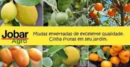 Super Promoção!!! - Mudas Frutíferas e Ornamentais 4 por 120,00 + Frete Grátis!