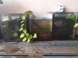 Aquário peixes (Aquapiso) criação