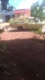 Jr jardinagem