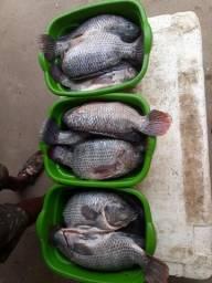 Vende-Se peixe