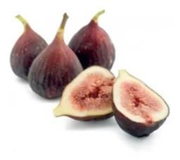 Vendo Muda de Figo Roxo