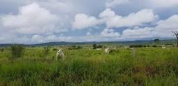 8271 | fazenda à venda em zona rural, alta floresta