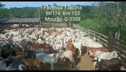 Fazenda na BR174 Km 153 1.000ha 1.700.000 m2 livre
