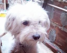 Cachorro 1 ano e 6 meses