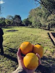 Sitio RS 020 4,8 hectares frente faixa Gravatai