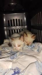 Doação de dois gatos recém nascidos resgatados