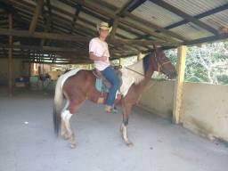 Cavalo Pampa, Fenômeno!