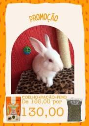 Promoção coelhos