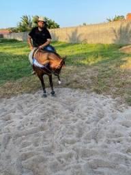 Cavalo Qm professor do Gado