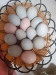 Vende-se Ovos de galinha caipira