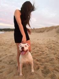 Título do anúncio: Pitbull branco de 11 meses a procura de uma namorada !!!