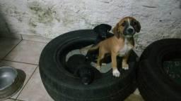 Filhotes cachorro vira lata
