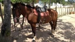 Vendo esse cavalo com carroça completa com arreios1.350,00 tudo