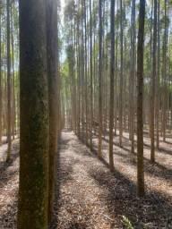 Vendo mato eucalipto 3.2 hectares