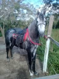 Cavalo magalarga picado
