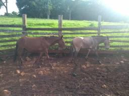 VENDO burros
