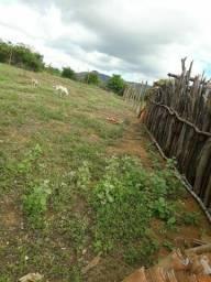 Título do anúncio: Vendo um terreno em serratalhada