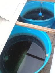 Limpeza de caixa d'água serviços de qualidade