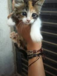 Estou doando esta linda gatinha
