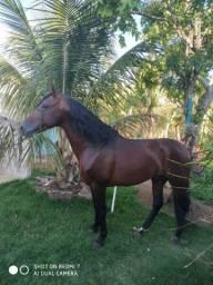 Cavalo MM registrado no definitivo