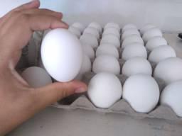 Ovos grandes e selecionados