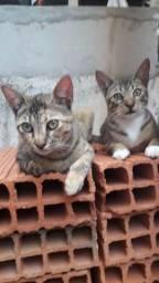 Título do anúncio: Gatos castrados