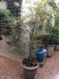 Plantas naturais diversas