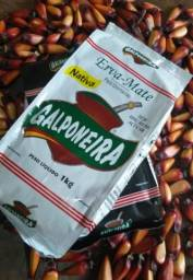 Erva mate Galponeira