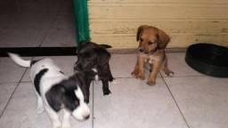Labrador x dog brasileiro so 100 cada.chama no whats whats 9- * entrego