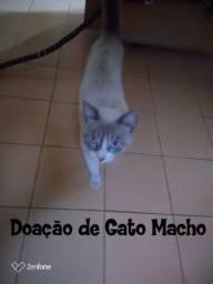 Doação de Gato Macho