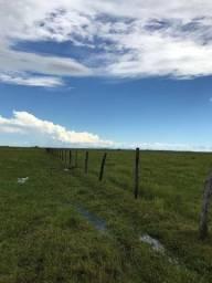 Pasto para arrendar Pantanal do Abobral